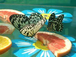 выставка бабочек, как идея заработка